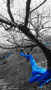 Champs d'arbres à Ume de Minabe
